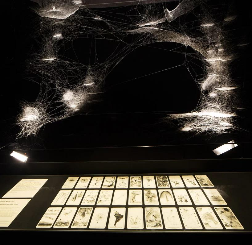 تارهای عنکبوت هنرمند آرژانتینی در دوسالانه هنر ونیز